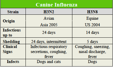canine influenza dog flu how long contagious