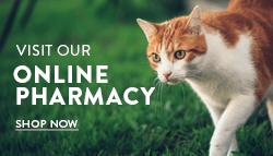 Shop Online Pharmacy now