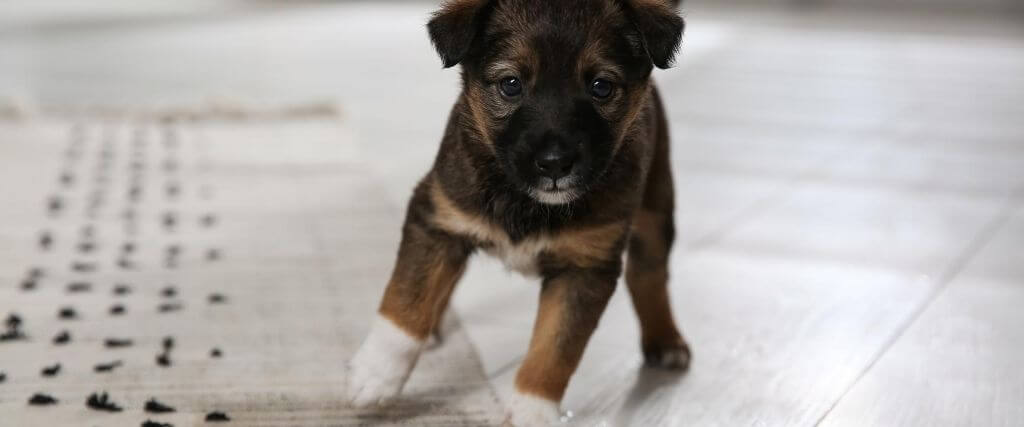 5 Puppy Housetraining Tips To Save Your Sanity
