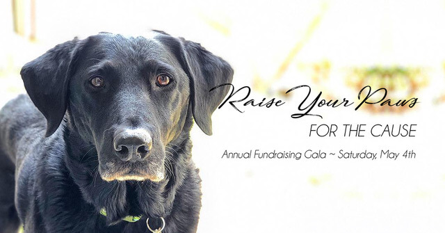 Midwest Lab Rescue Annual Fundraising Gala