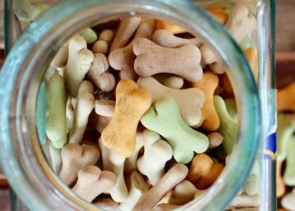 5 Cool Dog Treats to Make This Summer