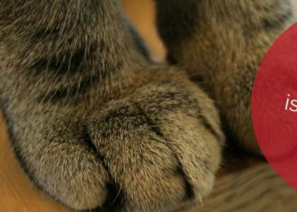 Alternatives to Declawing