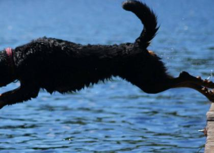 Canine Sports: Dock Diving is Making a Big Splash