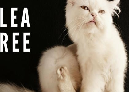Flea-Free: How to Control Parasites in Your Pet's Environment