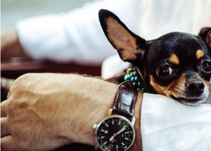 Top 4 Reasons to Welcome Pets into the Workplace