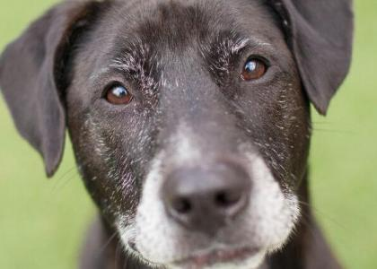health issues in senior dogs