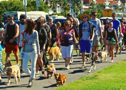 Dogs walking in a parade