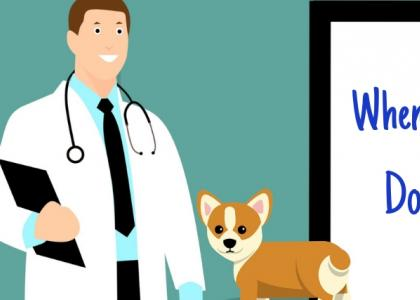 Illustration of dog at veterinarian appointmet