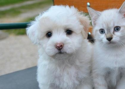 Finding the Right Vaccine Protocol for Your Pet